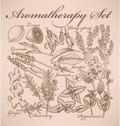 Aromatherapy set vector