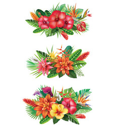 arrangements from tropical flowers vector image vector image