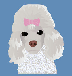 poodle close up vector image vector image