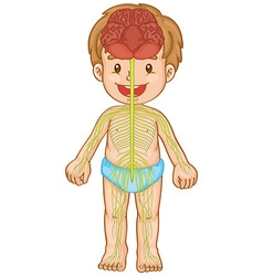 Little boy with nervous system vector