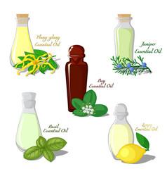 Essential oils vector