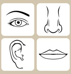 Face organs vector