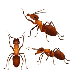 Set of ants with two antennas and six legs in vector image vector image