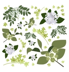 Set of drawing wild flowers vector image