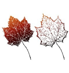 Grunge autumn leaves vector
