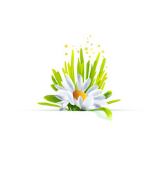 chamomile with grass decor vector image