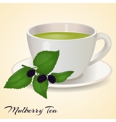 Cup of tea with mullberry and leaves isolated on vector