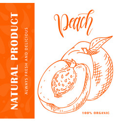 Hand drawn fruit  sweet peach element vector