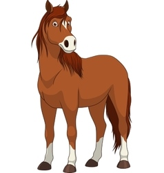Adult funny horse vector image