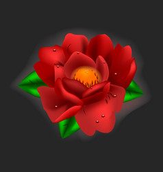 Beautiful flower red peony vector