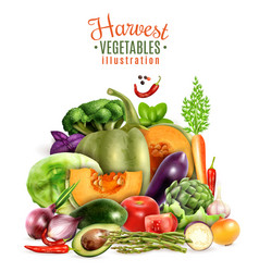 harvest of vegetables vector image