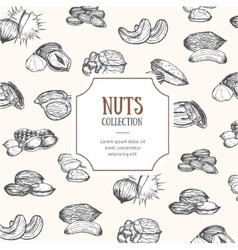 Nuts Package Design vector image vector image
