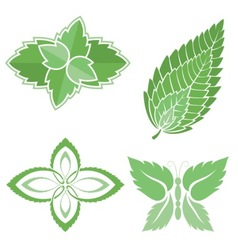 mint leaves icons vector image