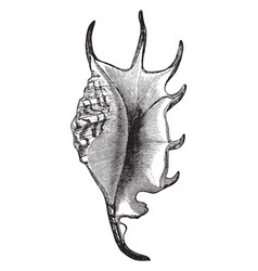 Scorpion conch vintage vector