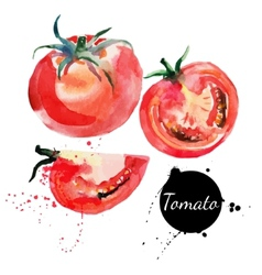 Tomato set hand drawn watercolor painting on white vector