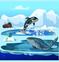 cartoon arctic fauna template vector image