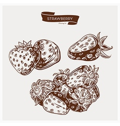 Strawberry drawing set vector image vector image