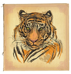 Tiger - colored line art vector
