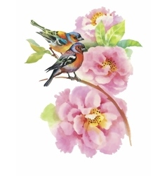 Watercolor wild exotic birds on flowers vector image vector image