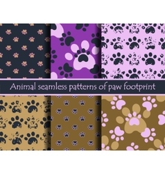 Animal footprints vector image