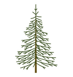 christmas tree fir object vector image