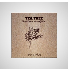 Herbs and Spices Collection - Tea tree vector image