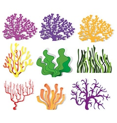 Various type of coral reef vector