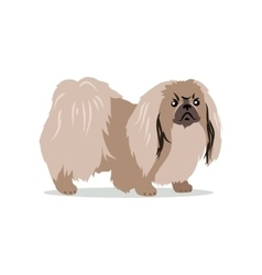 Pekingese isolated on white background vector