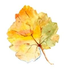 Watercolor leaf vector image