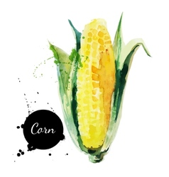 Corncob with leaf hand drawn watercolor painting vector