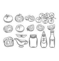 Set hand drawn tomato and sauce vector image