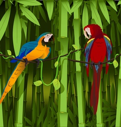 Parrots on a branch of liana vector