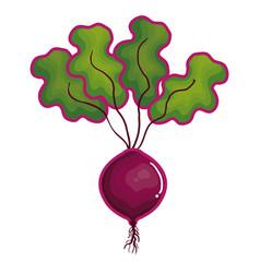 Onion fresh vegetable icon vector
