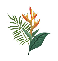 bird of paradise flower and leaves palm vector image