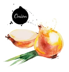 Onion hand drawn watercolor painting on white vector