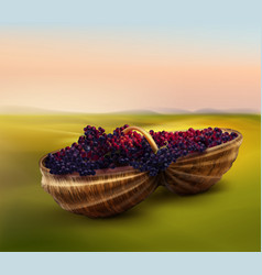 grape in basket vector image