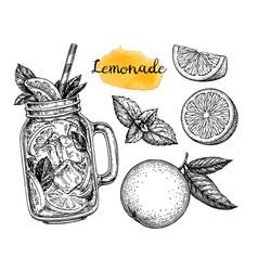 lemonade and ingredients vector image