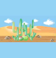 Nature scene with cactus in the desert vector