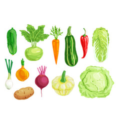 Organic vegetable watercolor set vector