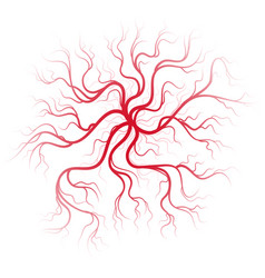 Human blood veins vector