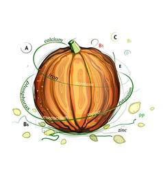 Pumpkin and Seeds Vitamins vector image vector image