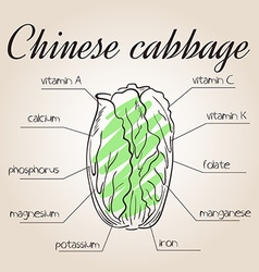 Nutrients list for chinese cabbage vector