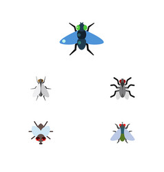 Flat icon buzz set of buzz gnat hum and other vector
