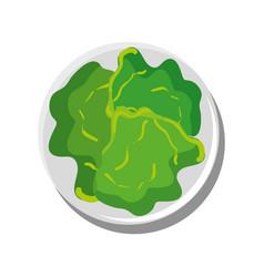 Lettuce vegetable isolated vector