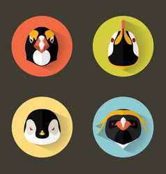 penguin portraits with flat design vector image