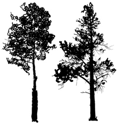 Tree silhouette ink graphic vector