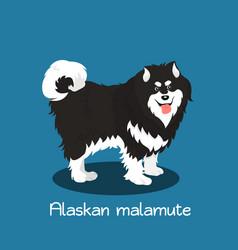 An depicting a cute alaskan malamute dog vector