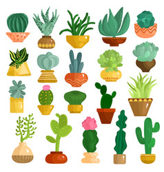 Cacti succulents in pots set vector