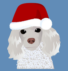poodle in santa cap close up vector image vector image