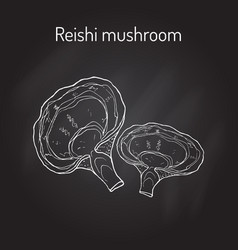 reishi mushroom ganoderma lucidum superfood vector image vector image